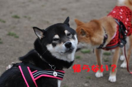 blog10593.jpg