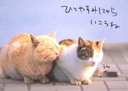 ひとやすみの猫ちゃん01