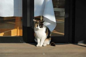 restaurant cat