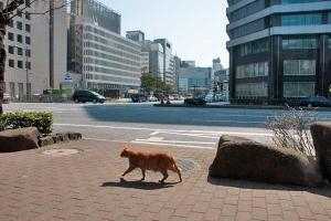 Tokyo Park Cat Ai-chan