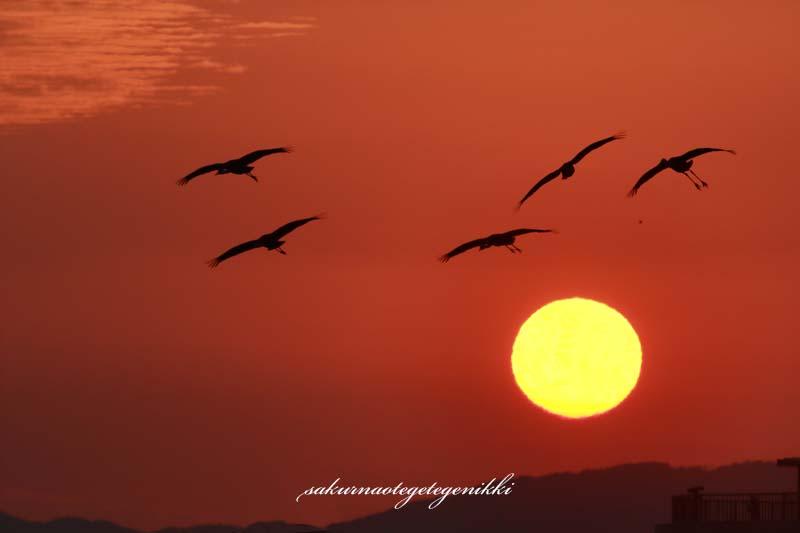 太陽と鶴-brog