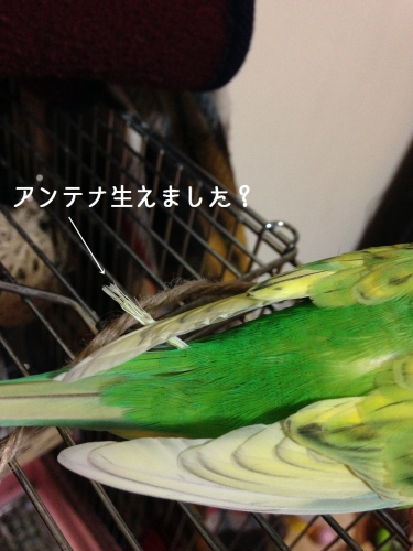 ss-IMG_6793.jpg