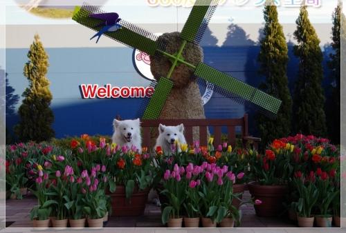 IMGP5971_20160213194305ecf.jpg