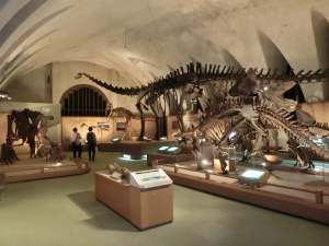 自然史博物館補足2
