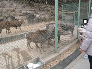 岡崎東公園動物園シカにエサやり
