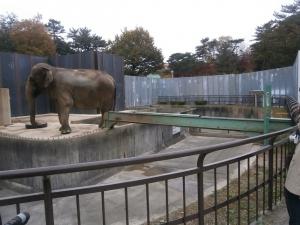 岡崎東公園動物園ふじこコンベア