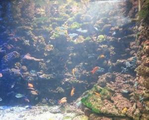 串本水族3
