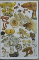 The_Magical_World_of_Fungi112.jpg