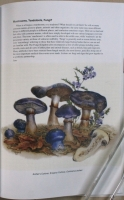 The_Magical_World_of_Fungi211.jpg