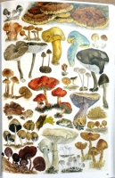 The_Magical_World_of_Fungi311.jpg