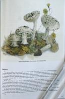 The_Magical_World_of_Fungi511.jpg