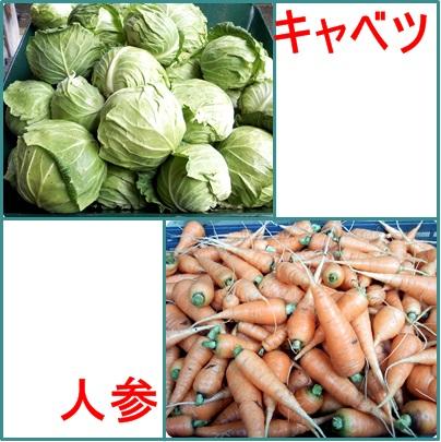 12月15日人参・キャベツ収穫