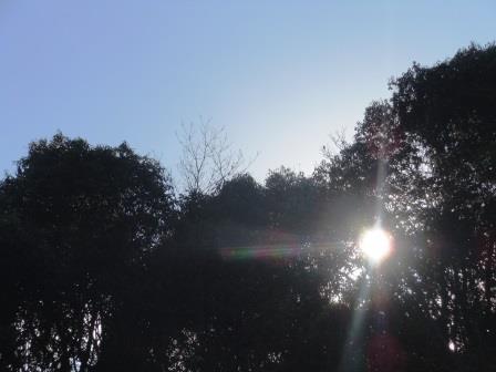 裏山4(2015-12-13)