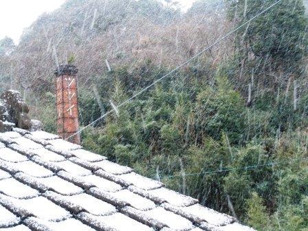 雪の朝2(2016-01-19)