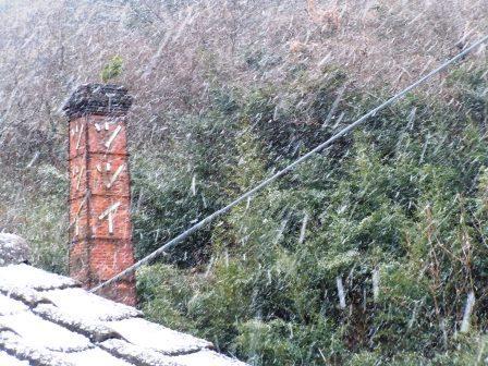 雪の朝3(2016-01-19)