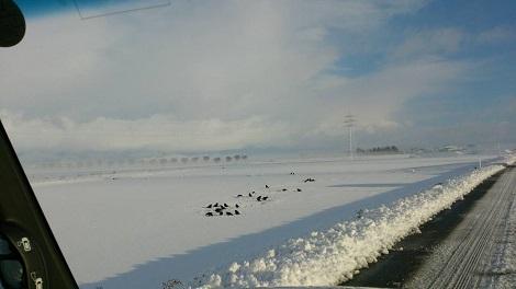 雪みっち3