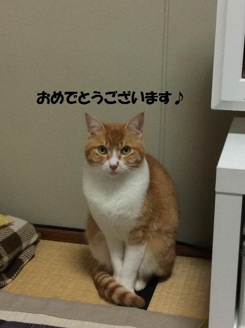 image5_20160102132206ff8.jpg