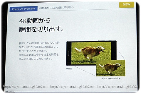 sayomaru15-470.jpg