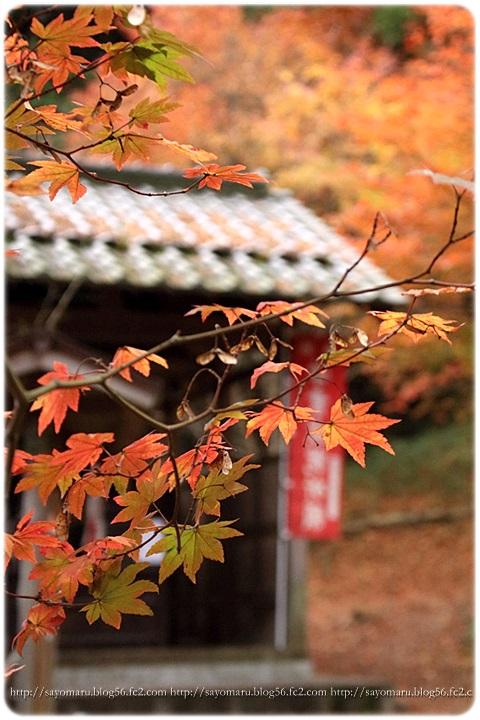 sayomaru15-724.jpg