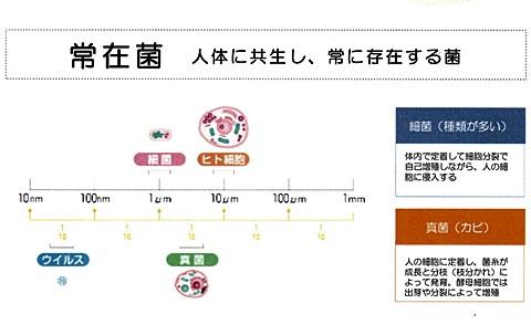 sayomaru16-231.jpg