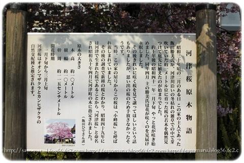 sayomaru16-257.jpg