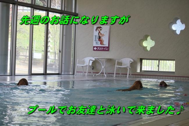 プールと体調不良 250