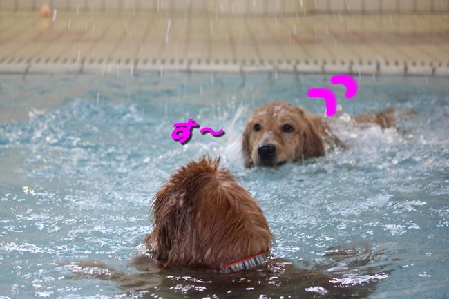 プールと体調不良 007