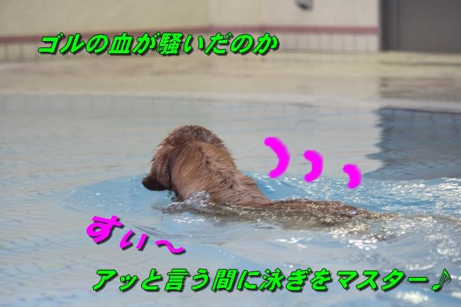 プールと体調不良 086