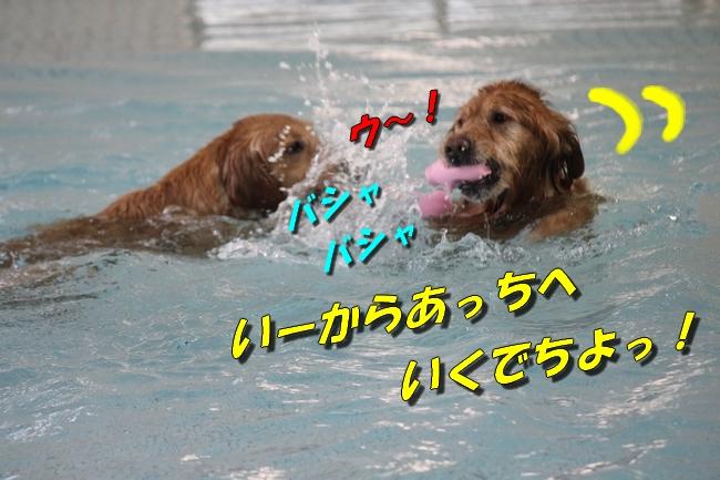 プールと体調不良 053