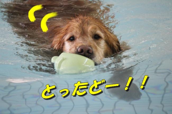 泳ぎ納め 001