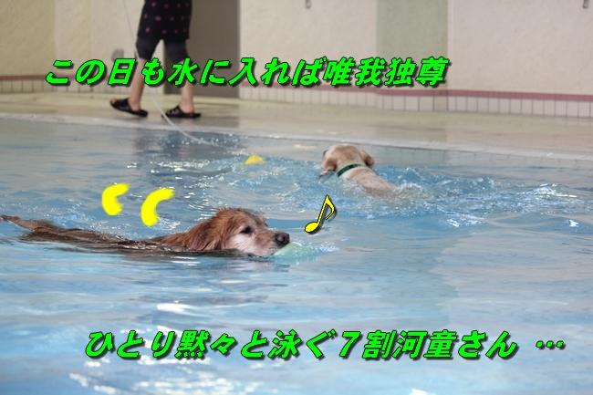 泳ぎ納め 011