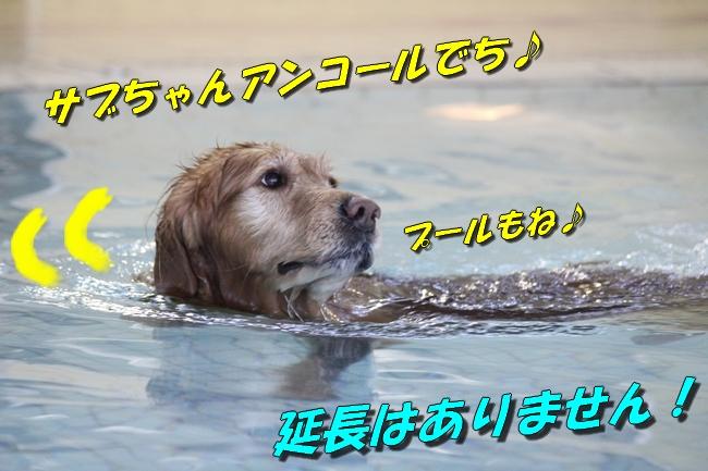 泳ぎ納め 027