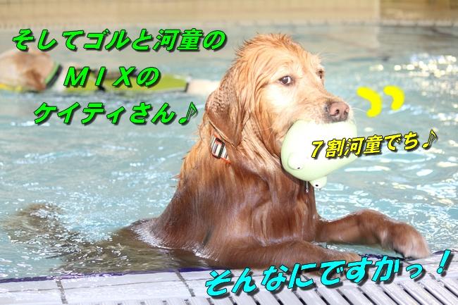 泳ぎ納め 053