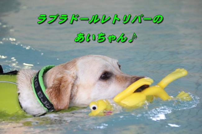 泳ぎ納め 090