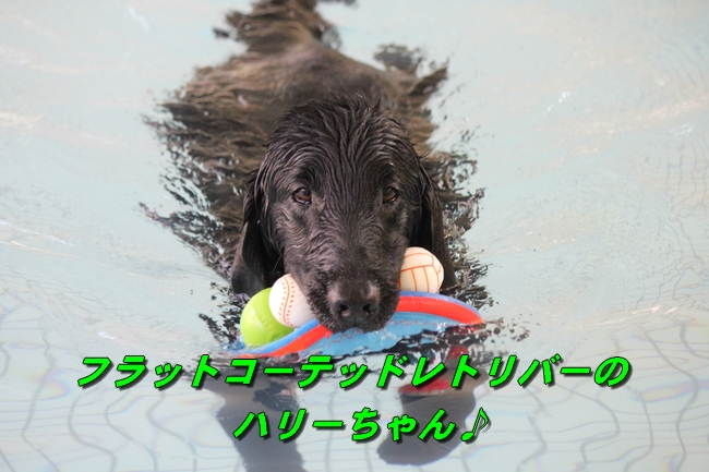 泳ぎ納め 114