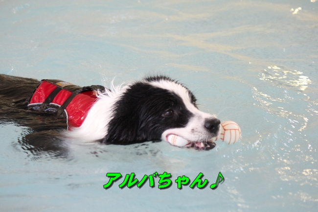 泳ぎ納め 132