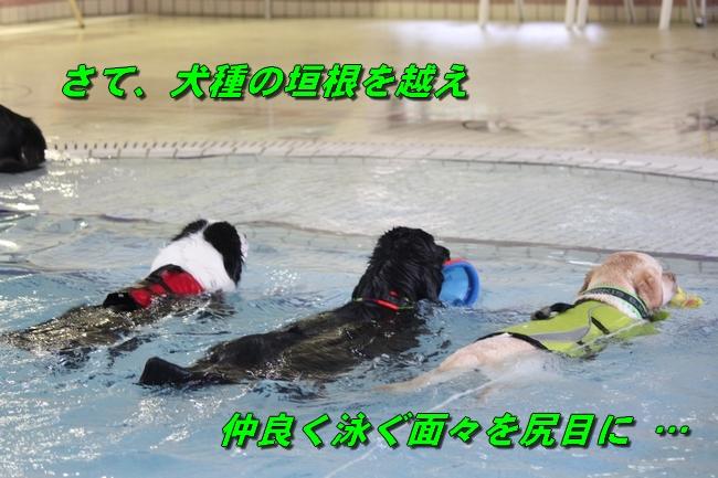 泳ぎ納め 144