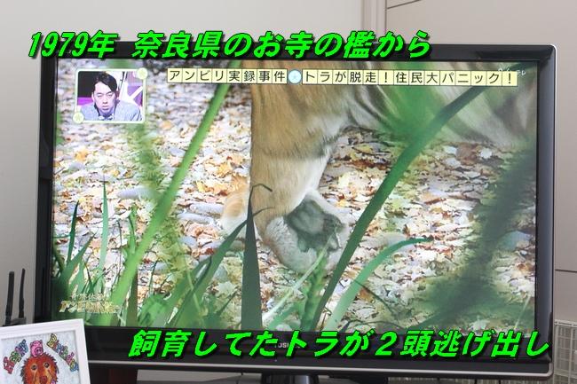 トラ狩り 003