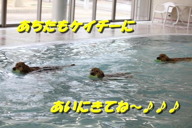 初泳ぎこなつさくら 309