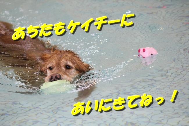 初泳ぎこなつさくら 166