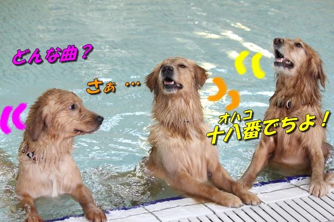 初泳ぎこなつさくら 441