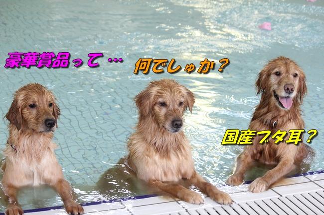 初泳ぎこなつさくら 447