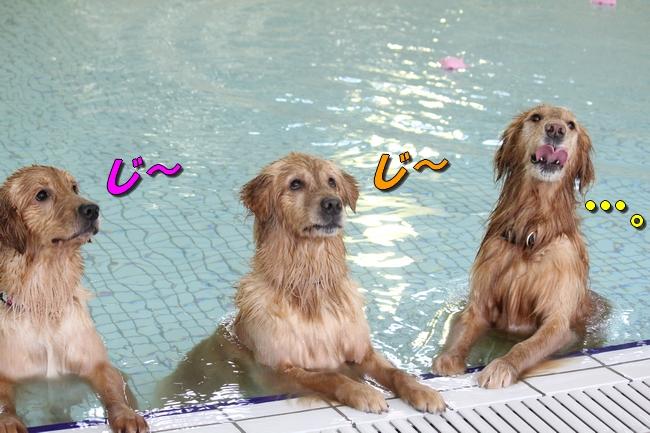 初泳ぎこなつさくら 448