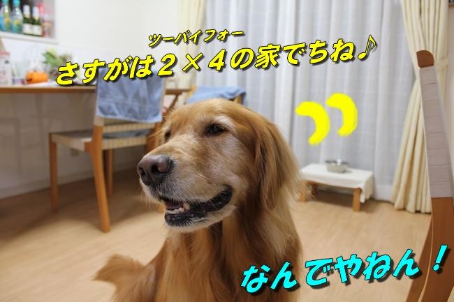 五郎丸インタビュー 012