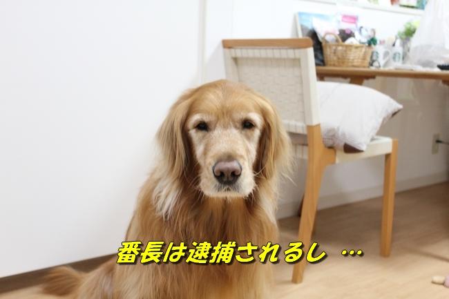 桜島 013