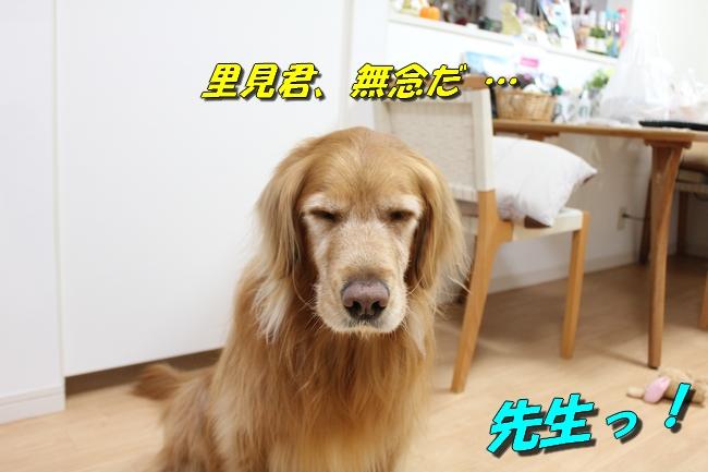 桜島 017