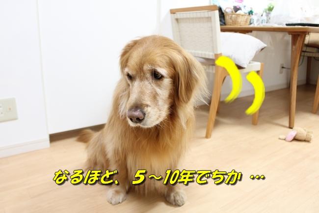 桜島 020