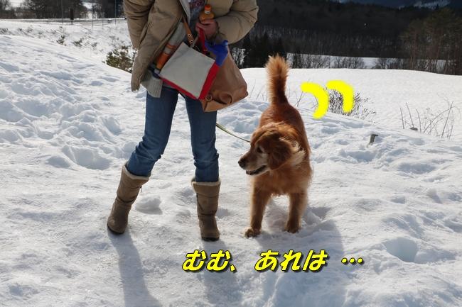 雪遊び2016 045