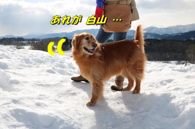 雪遊び2016 048