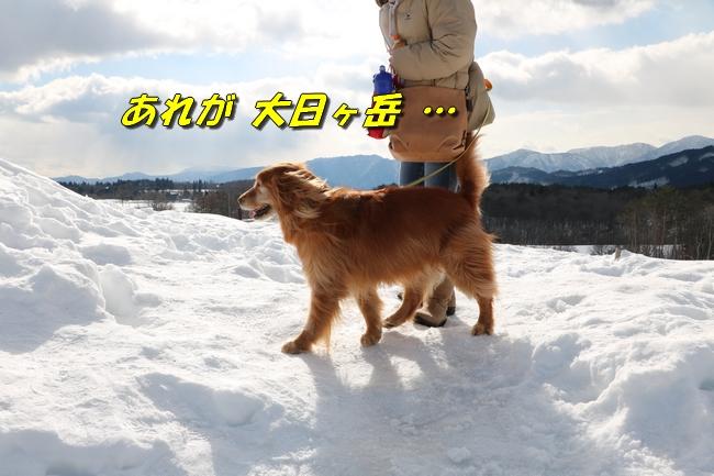 雪遊び2016 049
